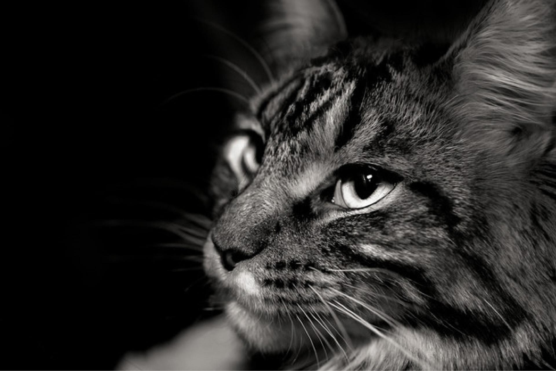 katt, zoo center, zoobutik, djuraffär, kattmat, kattsand, kattleksaker, klösbräda, katthalsband, kattbur, kattmöbel, kattbädd, kattsäng, kattgodis